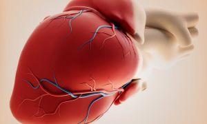 Причины бычьего сердца у человека, диагностика и лечение заболевания