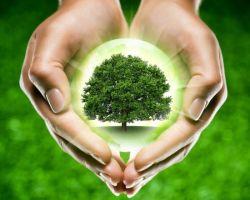 Народные средства от болей в сердце в домашних условиях