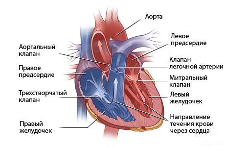 Какие бывают виды пороков сердца и их классификация